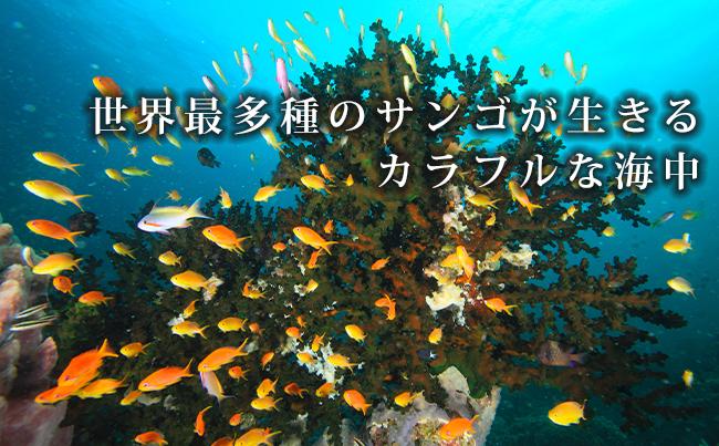 世界最多種のサンゴが生きるカラフルな海中