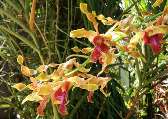 動植物園には様々な蘭の花が