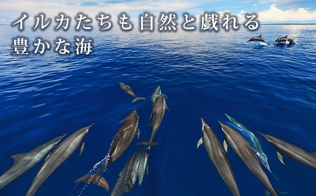 イルカたちも自然と戯れる豊かな海